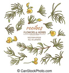 rooibos vector set on white background