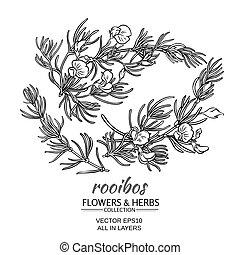rooibos vector set - rooibos branch vector set on white ...