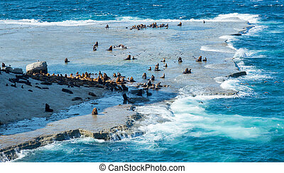 Rocky beach of peninsula of Valdes, rookery of fur seals. Patagonia, Argentina, South America
