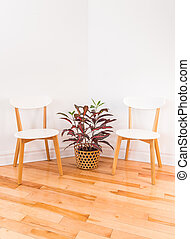 Room corner with elegant chairs and colorful Croton plant