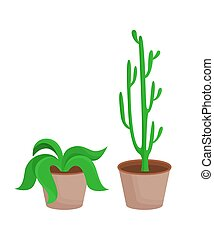 Room Plants with Leaves Set Vector Illustration