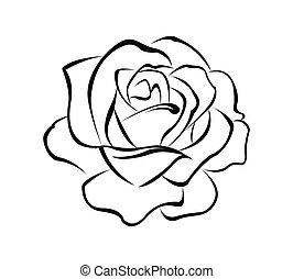 roos, bloem