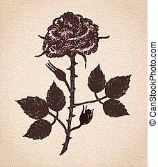roos, bloem, perkament