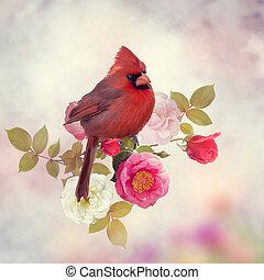 roos, bloemen, mannelijke , kardinaal, noordelijk