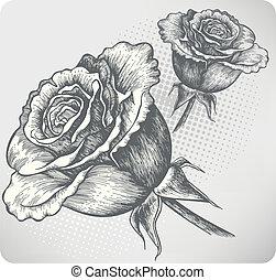 roos, hand-drawing, ouderwetse , bloeien