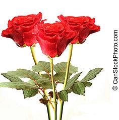 roos, isoleren