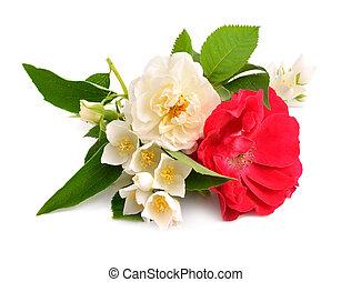 roos, met, jasmijn, vrijstaand, op wit, achtergrond.