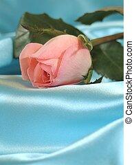 roos, op, blauw satijn