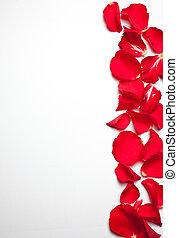 roos, papier, achtergrond