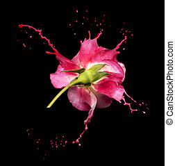 roos, plonsen, rood