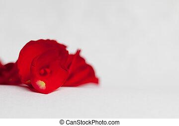 roos, rood, kroonblad