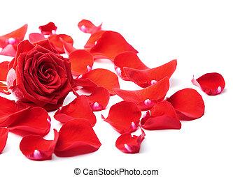 roos, vrijstaand, rood, kroonbladen