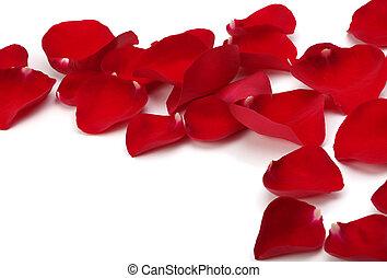 roos, witte , kroonbladen