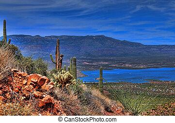 Roosevelt Lake in central Arizona with saguaro cacti