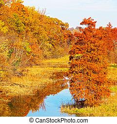 roosevelt sziget, alatt, a, bukás, washington, dc., tó, van, gondolkodás, gyönyörű, ősz foliage, közül, körülvevő, fa.