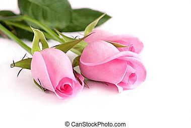 rooskleurige rozen, drie
