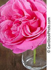 rooskleurige rozen, glas