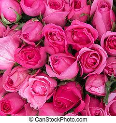 rooskleurige rozen, liefde, achtergrond