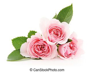 rooskleurige rozen