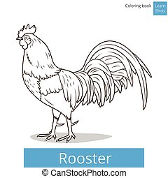 Rooster learn birds coloring book vector - Rooster learn...