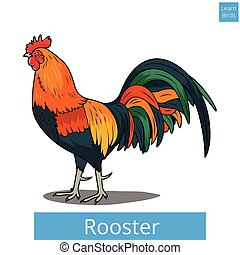 Rooster learn birds educational game vector