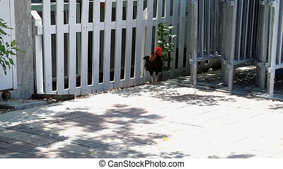 Rooster Walk Key West Florida