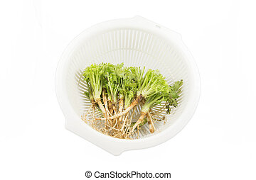 Root of Parsley in a basket