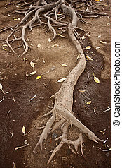 large root growing and extending, spreading in the soil