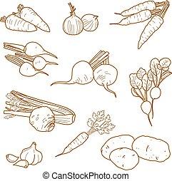 Root vegetables, vegetarian farm products set, vector,...