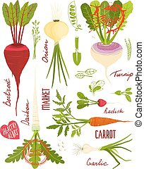 Root Vegetables with Greens Signs and Symbols Design...