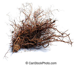 Root wood - Root of the cut tree on a white background.