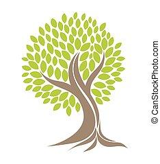 roots., albero