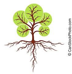 roots., arbre