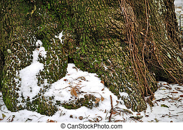 Roots in snow