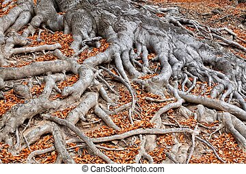 Roots of a tree in fall colors