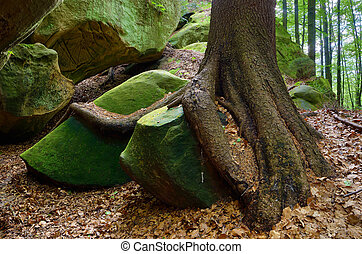 Roots of a tree on a rock