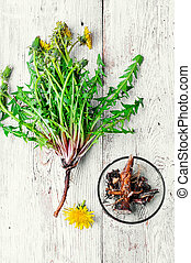 roots of dandelion flower - Harvested roots of medicinal ...