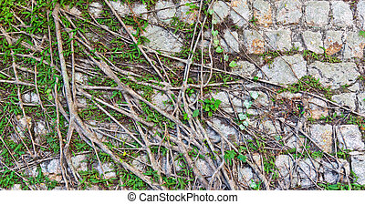 Roots on the wall texture background