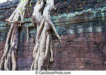 Roots over an ancient temple