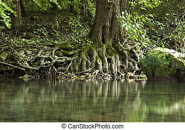Roots - Wooden Roots On Edge Of River