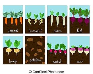 Roots vegetables garden growing vector of cards....