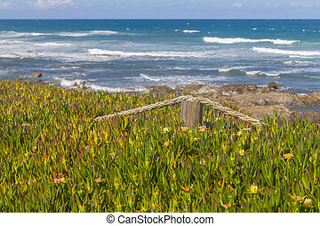 Rope hidden in the middle of beach vegetation in Vila Nova de Milfontes