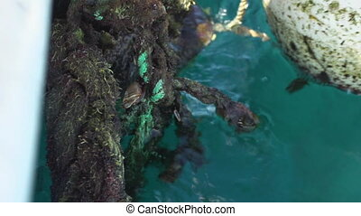 Rope on water shot - A birds eye view shot of a rope on...