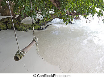 Rope swing from tree near beach by the sea