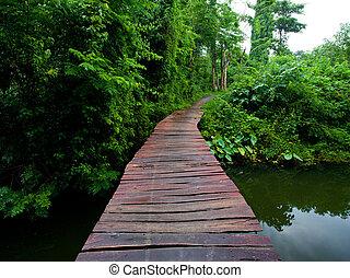 Rope walkway in forest - Rope walkway through the treetops...