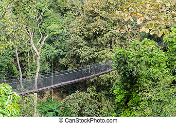 Rope walkway through the treetops in a rain forest in Thailand