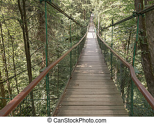 Rope walkway through the treetops in a rain forest