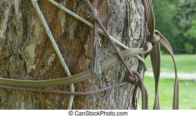 Ropes Knots Tensions - A tight rope is tensioned by forces,...