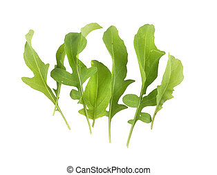 Roquette isolated on background
