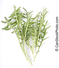 Roquette on white background